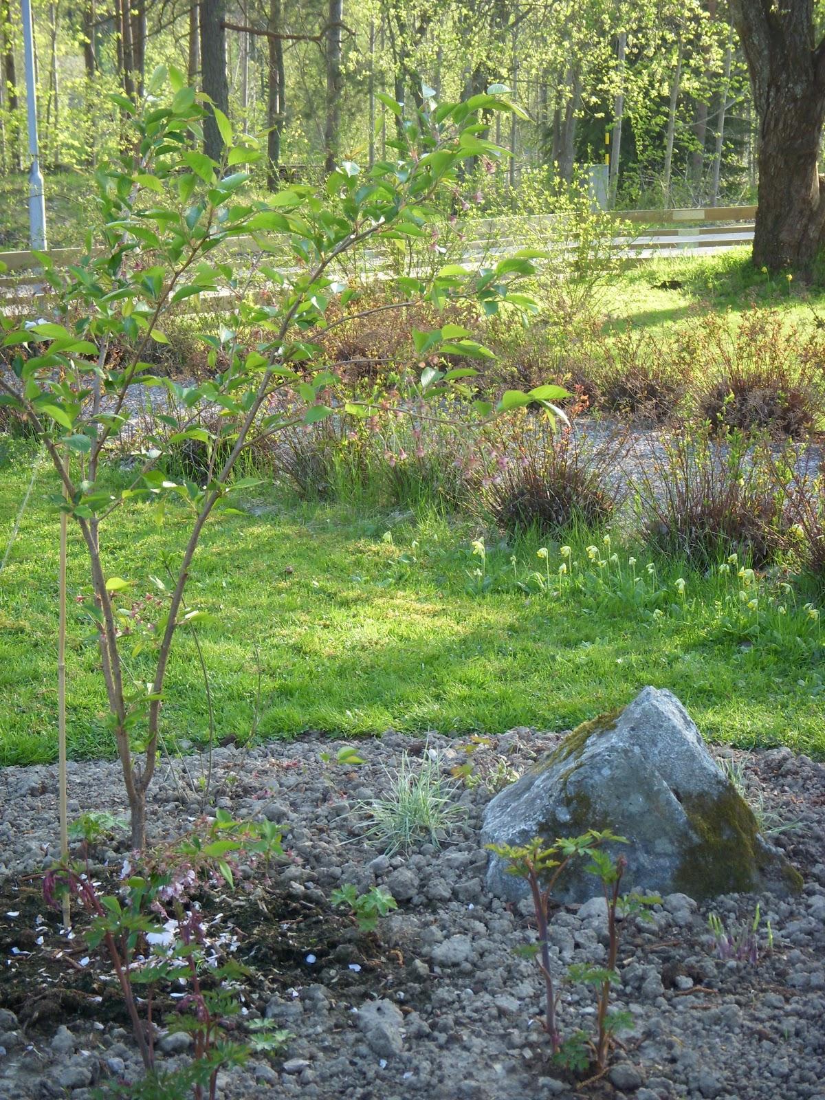 Helena´s hem & trädgård: acchleja träffen hos petra!