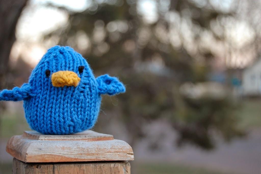 twitter bird picture