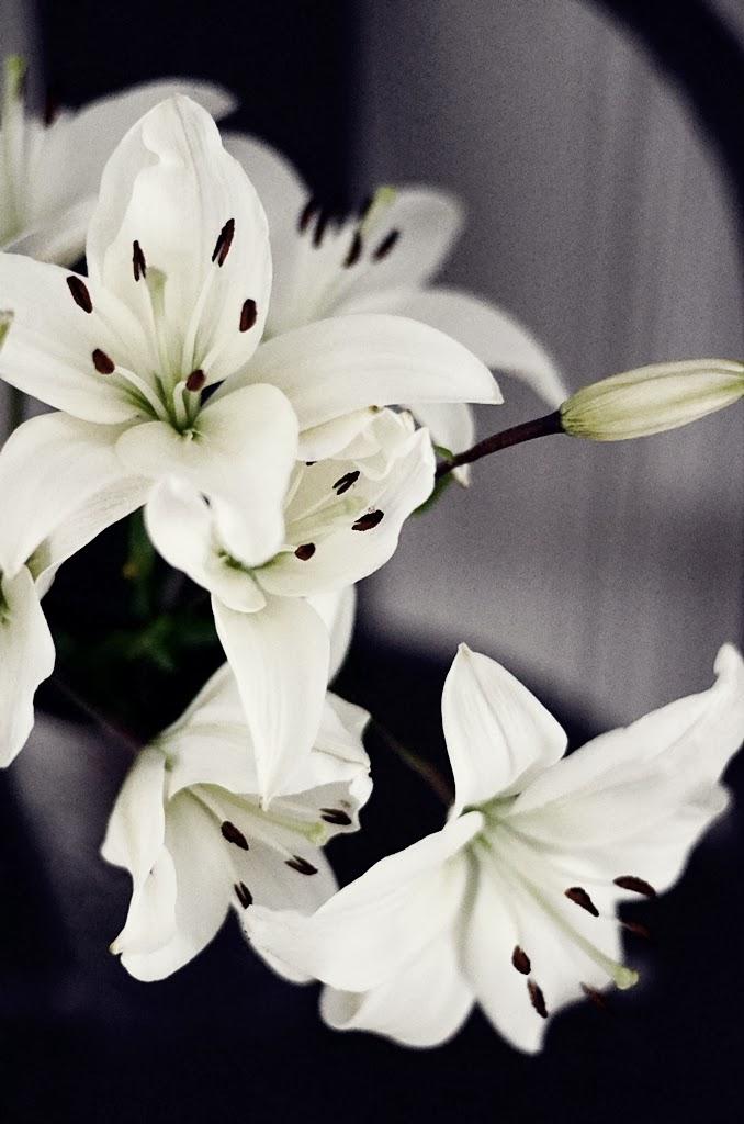 liljor, inredning, lilies