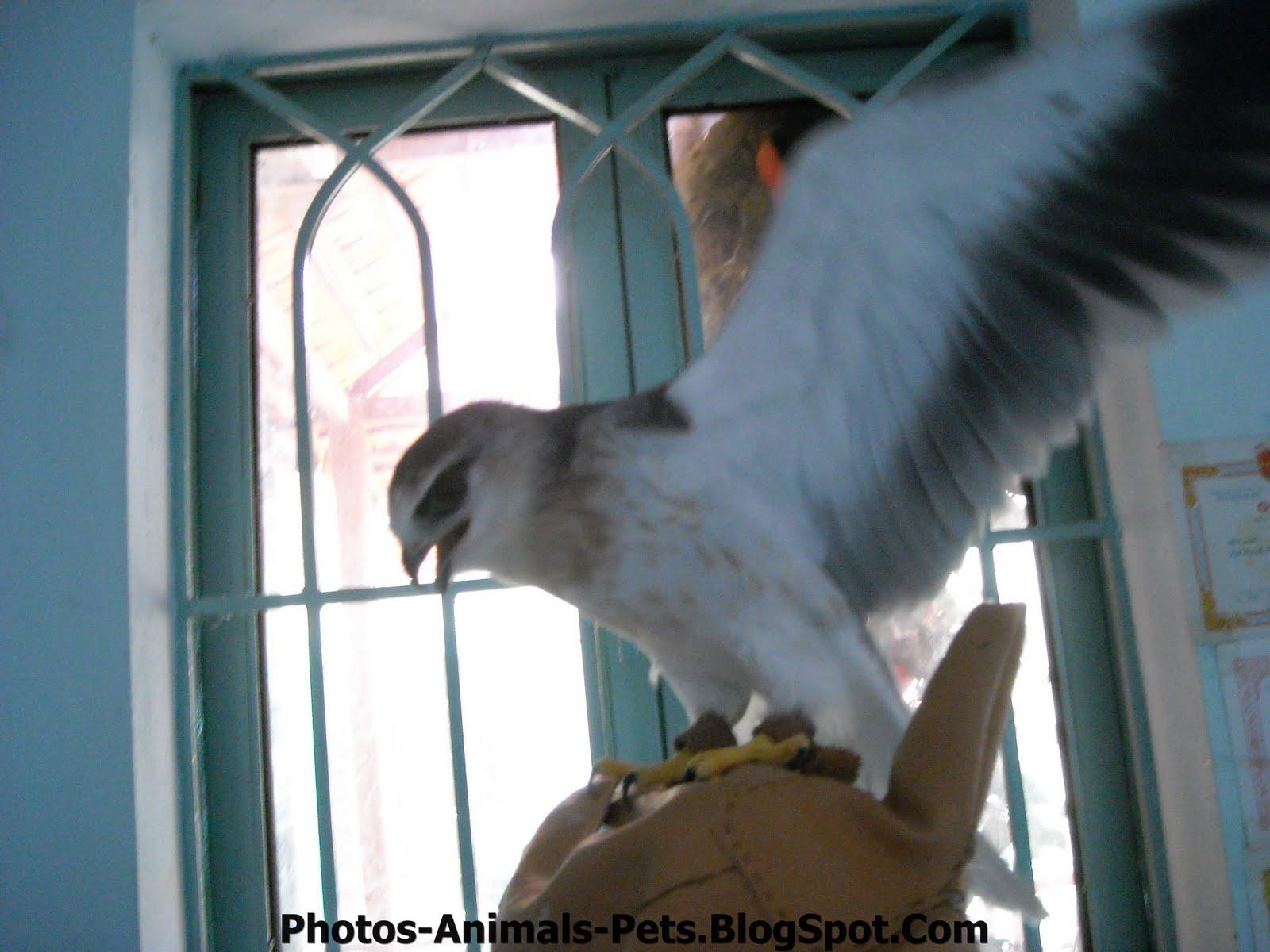http://4.bp.blogspot.com/-fQWczbz6AwQ/TxRakqLnddI/AAAAAAAAC2Q/9olUsfI551U/s1600/Pet%2Bbird%2Bpictures.jpg