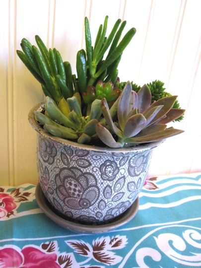 beautifully contained fool proof indoor succulent garden
