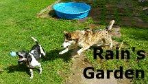 Rain's Garden Blog