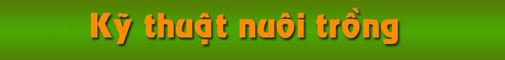 Kỹ thuật nuôi trồng | Ky thuat nuoi trong