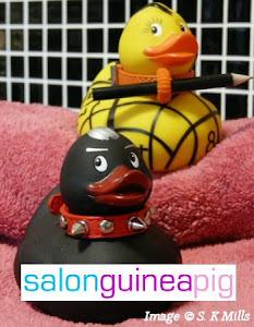 Salon Guinea Pig