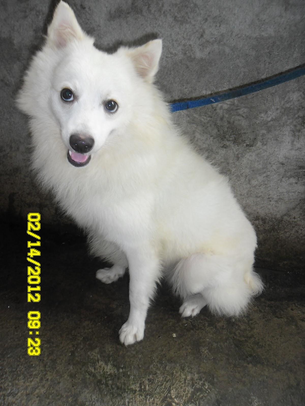 Jeni The Girl Next Door Ito Naman Si Jaycee Isang Chihuahua Dog
