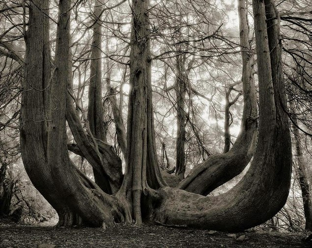 beth moon oldest living trees-12
