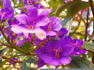 Perfect Purple Flowers Image