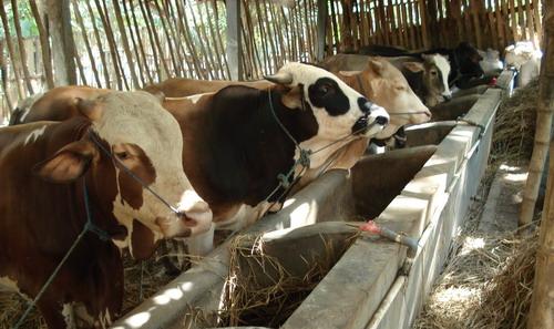 usaha ternak rumahan yang menjanjikan