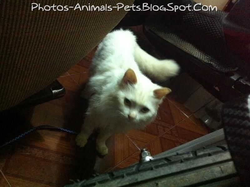 http://4.bp.blogspot.com/-fRs2m0h8l5M/TbGis1iBY6I/AAAAAAAAAvI/8tpxb8XPSp4/s1600/Cat%2Bfur%2Bruffled_0002.jpg