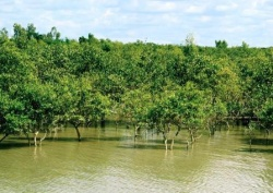 travel to Sundarban with special travel guide