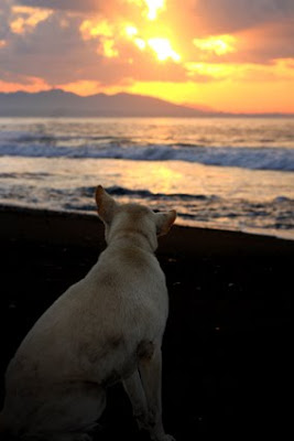 sunrise admirer