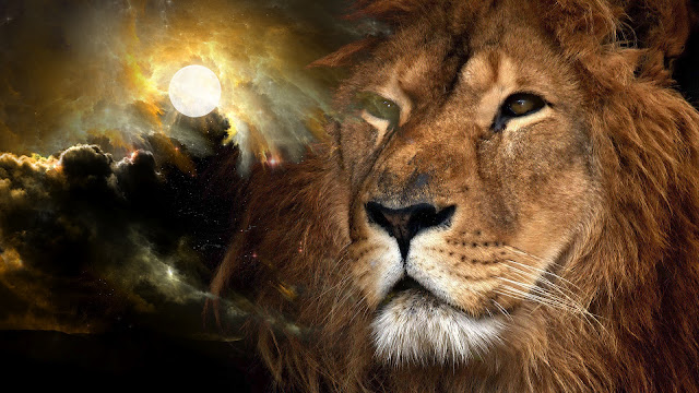 Lion Wallpapers HD free
