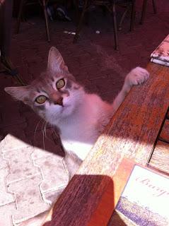 Burgazada Burgaz Cafe kedi