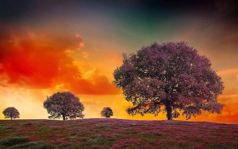 fioletowy krajobraz