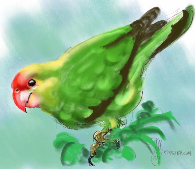 Black-winged Lovebird by Artmagenta