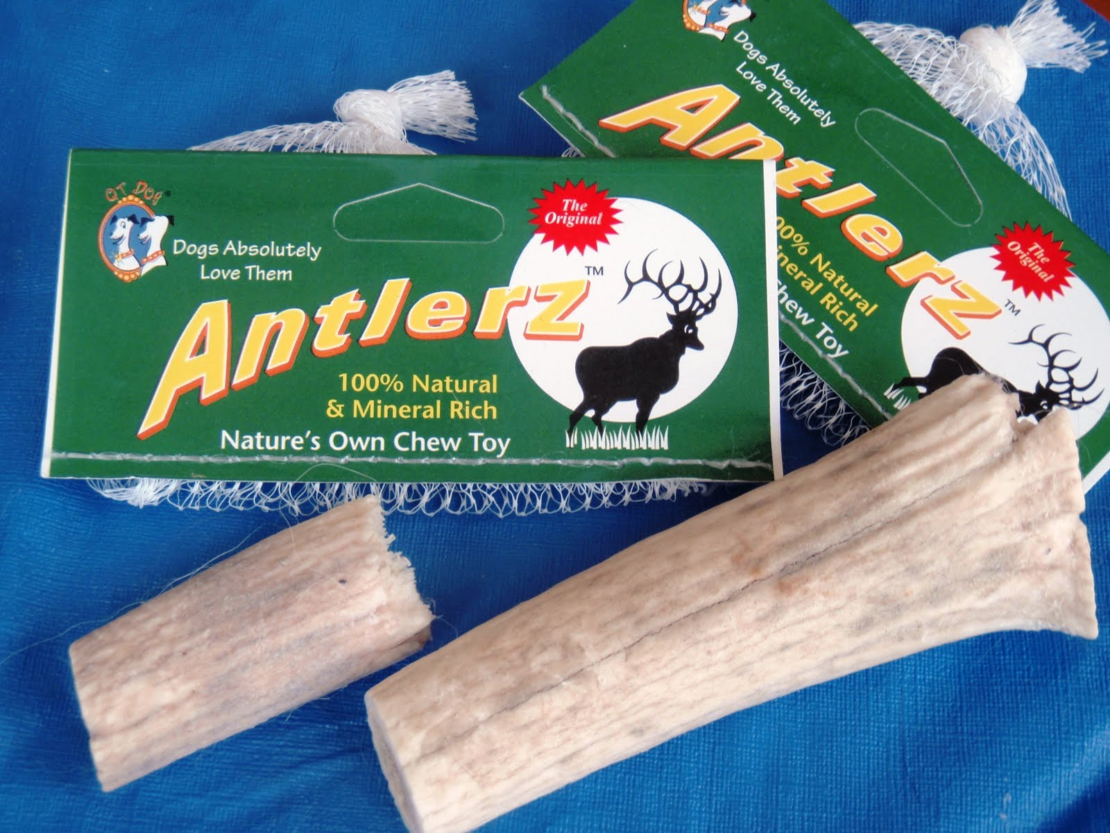 Image Result For Can Antlers Break