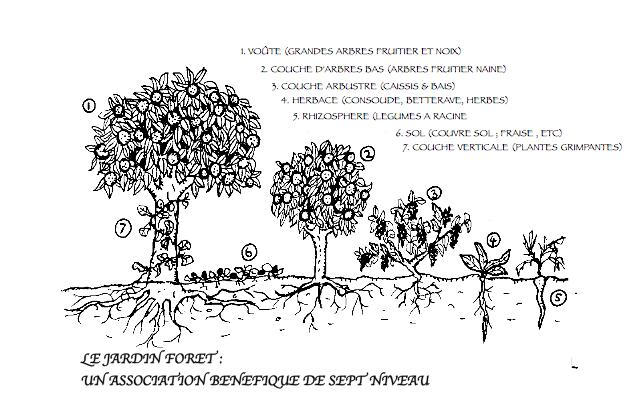 Permaculture france jardin for t for Jardin foret
