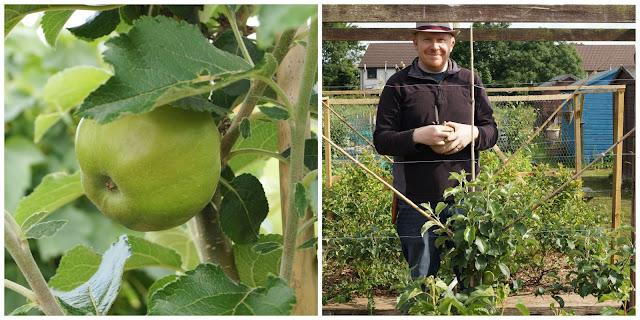apple pruning - growourown.blogspot.com ~ an allotment blog
