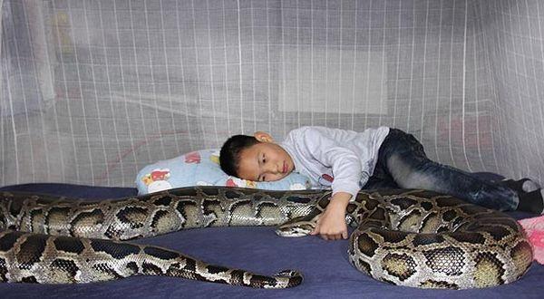 foto ular gambar hewan