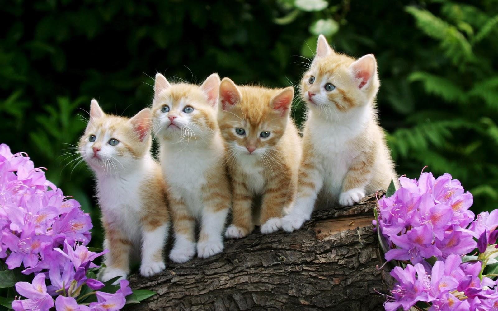 http://4.bp.blogspot.com/-fShxis8PIU0/Toa4sKukxXI/AAAAAAAAAkg/W6FAw3b3Xho/s1600/Curious-Kittens-wallpaper.jpg