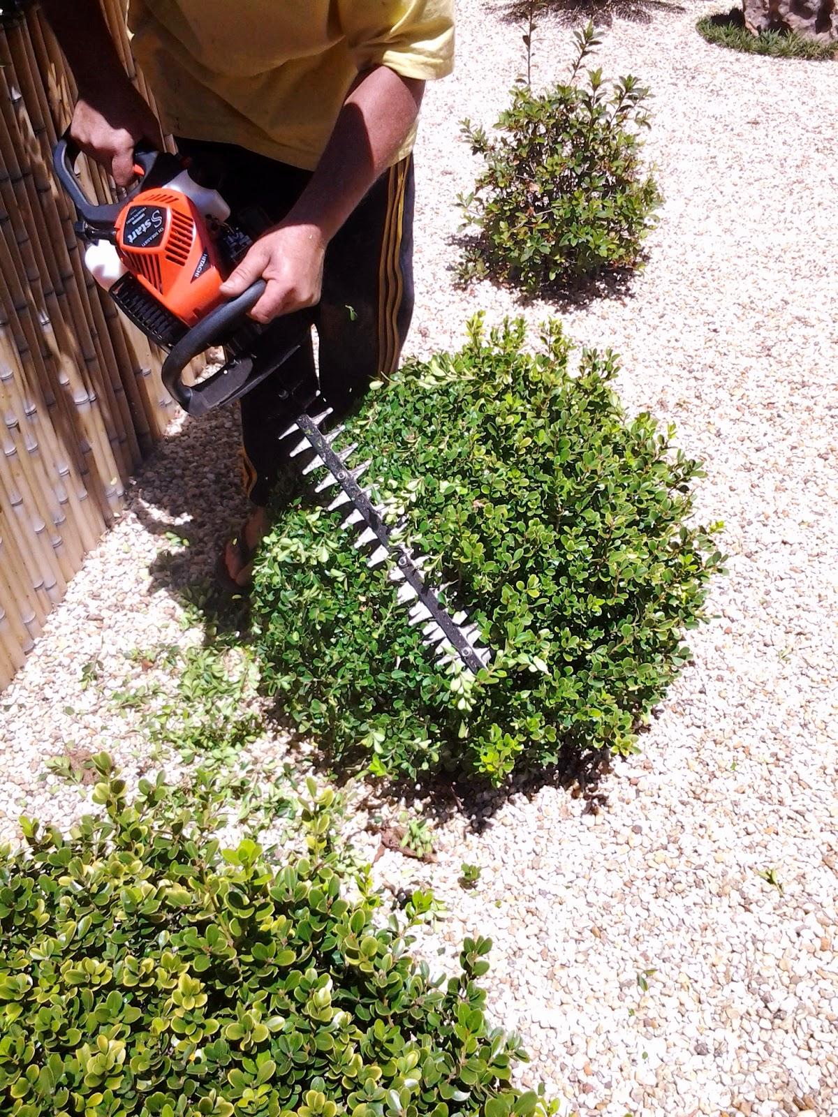 manutenção de jardim; topiaria