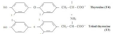 Cấu tạo thiroxin