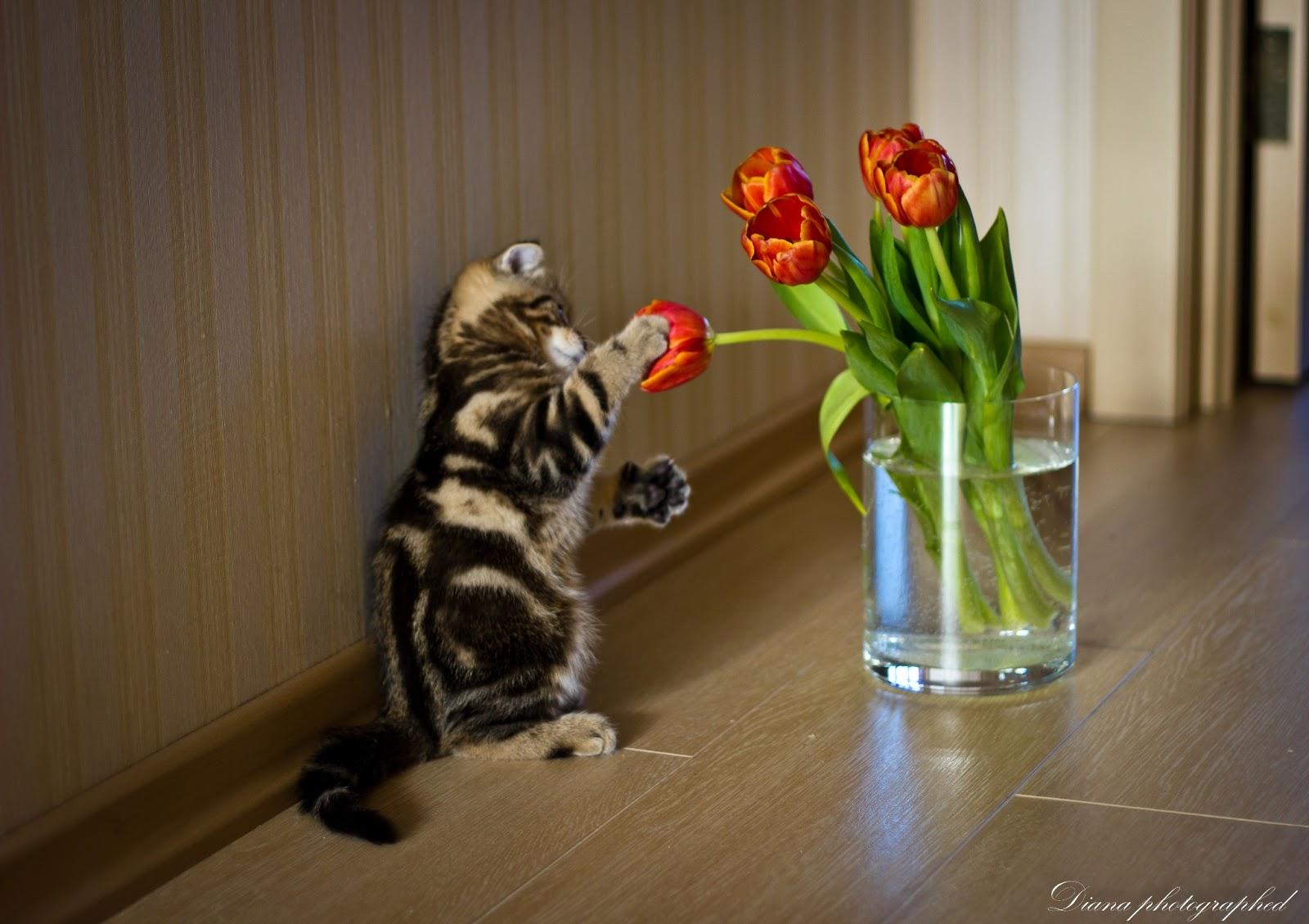 """Коты и цветы. Праздничное приложение к котоальманаху """"Коты через века.&quot 5"""