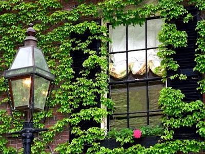 jardines verticales, muros verdes, greenwalls, diseño plantas enredaderas, foto 12