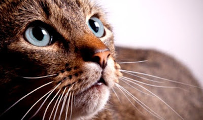 Inilah Alasan Mengapa Semua Kucing Jika Dipanggil Puss Selalu Menengok
