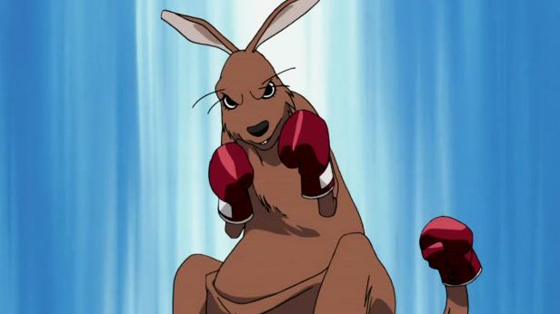 animales Canguros_Boxeadores