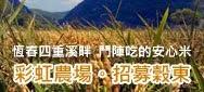 彩虹農場。招募榖東