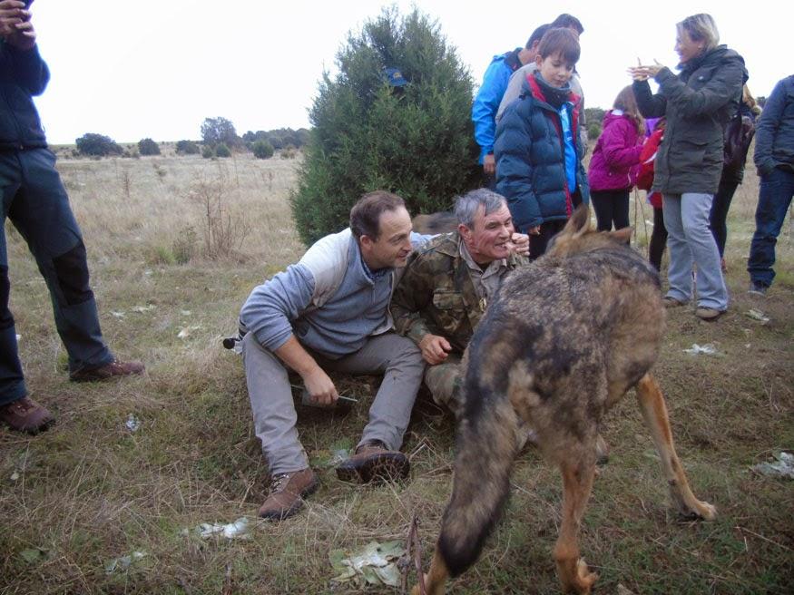 Qué hay detrás de la foto con un animal salvaje en  - fotos de animales salvajes en accion