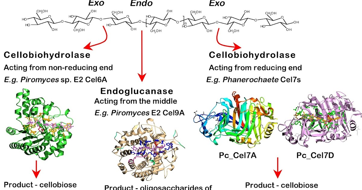 Fungal Cellulases - Chemical Reviews (ACS Publications)