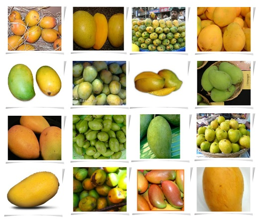 The earth of india varieties of mangos in india