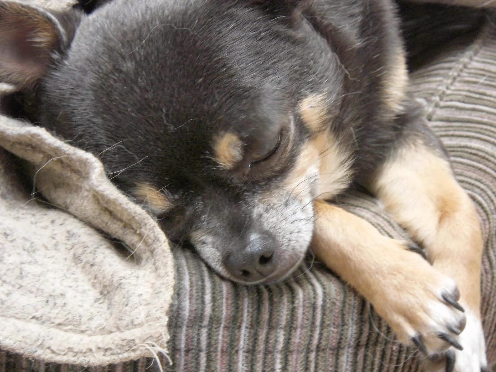 Picognito...het eeuwige lieve slaapkopje ;-)