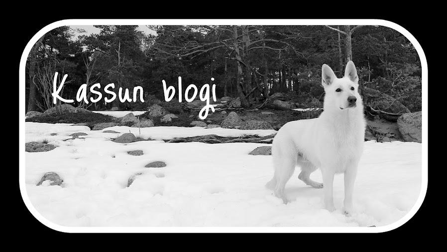 Kassun blogi