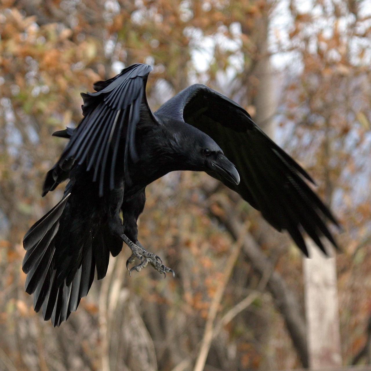 Raven Flight Nude Photos 96