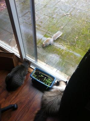Squirrel 03