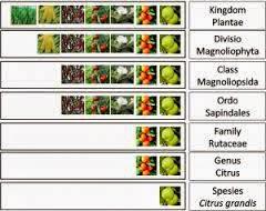 klasifikasi makhluk hidup lengkap