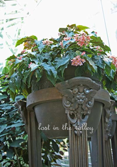 Begonia House Foyer : Lost in the valley photography march