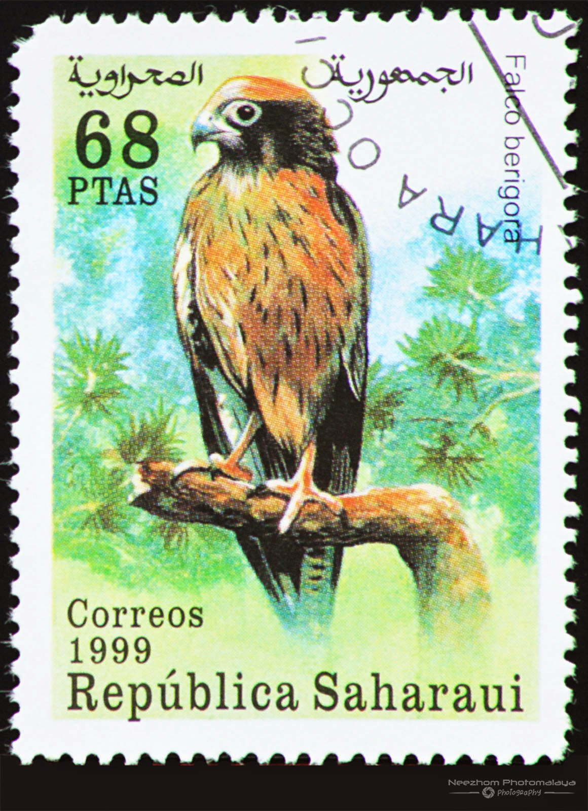 Western Sahara 1999 Birds of Prey stamp - Brown Falcon (Falco berigora) 68 ptas
