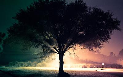Wallpaper Pohon dan Kabut Cantik
