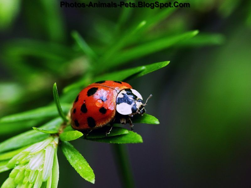 Insects pictures
