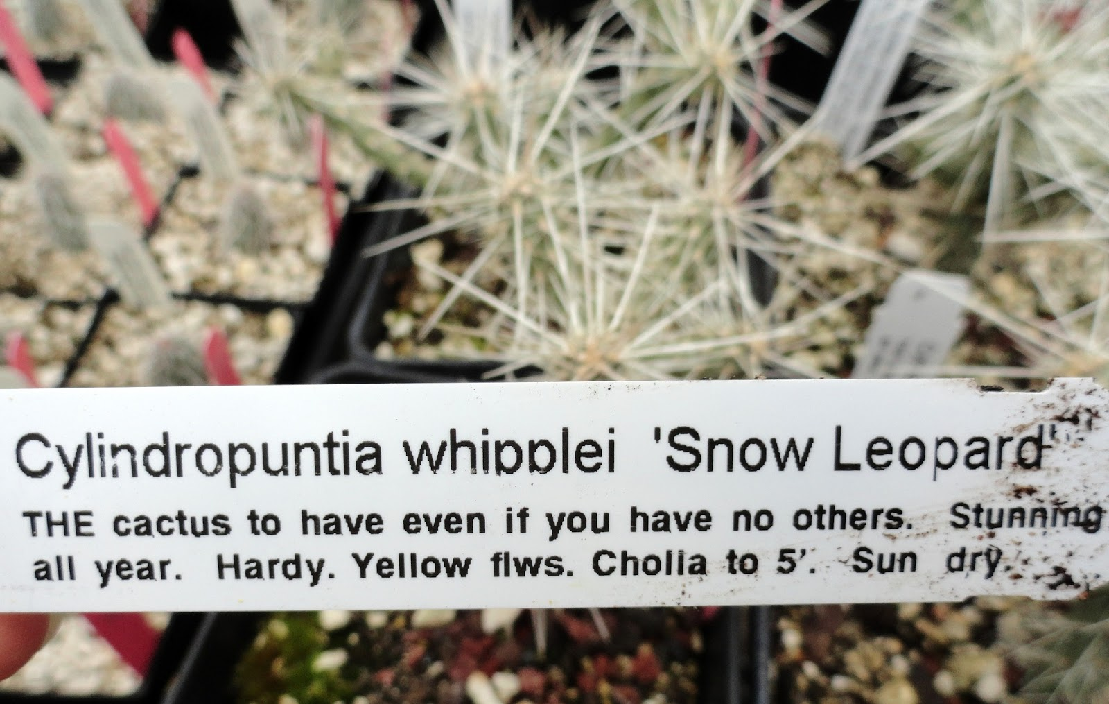 I Also Really Enjoyed Reading Their Plant Tags.
