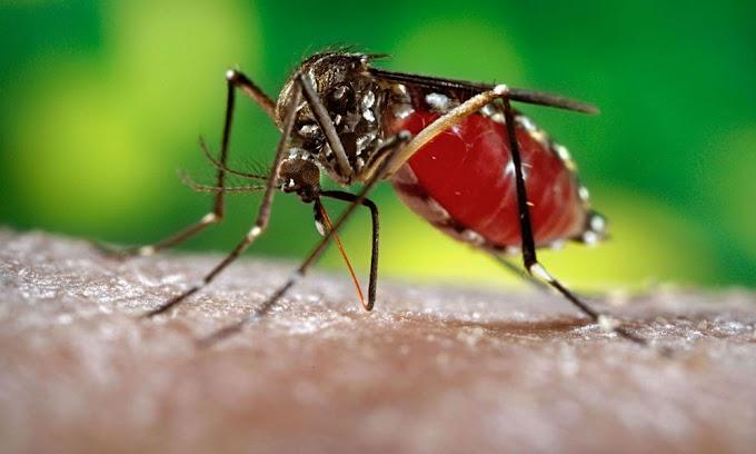 Prevén para abril un repunte de zika