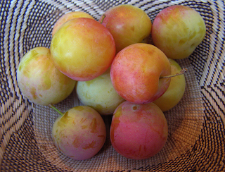 Basket of Red and Yellow Apricots
