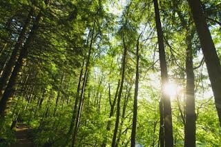 Plum Grove Printers Environmentally Friendly Printing