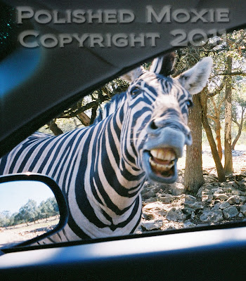 Picture of a zebra's face laughing at us.