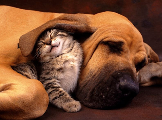 pets cat and dog animal picture