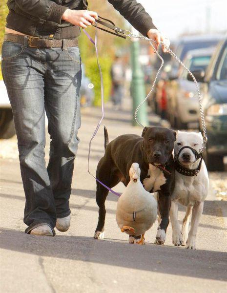 Dog, Dog, Duck